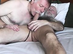 Two Daddy Bears Sucking & 69